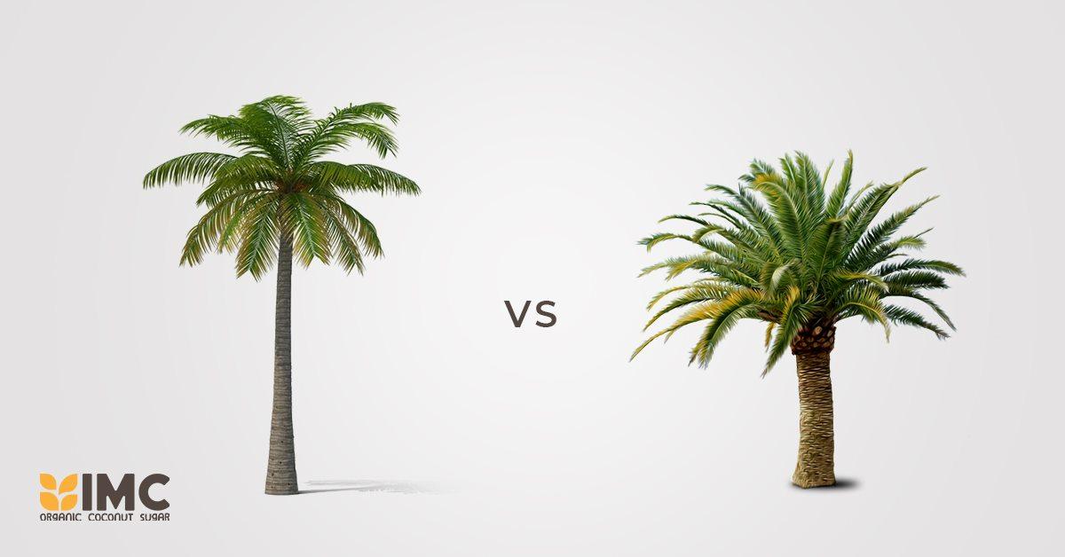 Coconut sugar VS Palm sugar, are they the same?